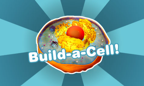 Build-a-Cell