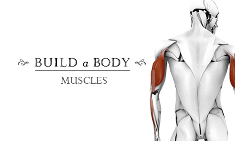 Build-a-Body: Muscles