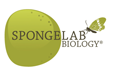 game content cover spongelab biology